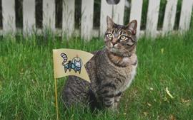 Кошка и флаг, трава, забор