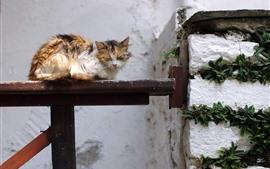 Кошка спит на скамейке
