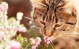 Preview wallpaper Cat sniff flowers