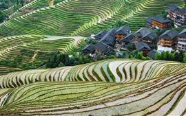 China, guangxi, longsheng, terraço, bonito, paisagem rural