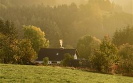 Campo, casa, hierba, árboles, niebla, mañana.