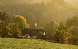 Campagne, maison, herbe, arbres, brouillard, matin