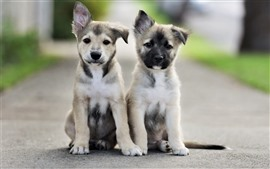 Preview wallpaper Cute two puppies, friends