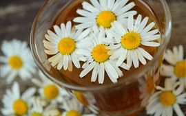 Preview wallpaper Daisy, white flowers, tea