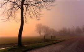 Amanhecer, árvores, nevoeiro, casa, estrada, campo