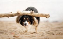 Dog at beach, look