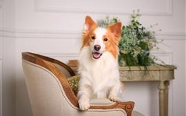 Cão, cadeira