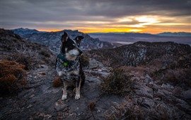 Preview wallpaper Dog sit on ground, mountains, sunset