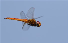 Dragonfly flight, sky