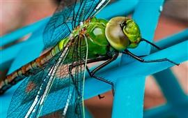 Libélula, asas, cabeça, olhos, inseto