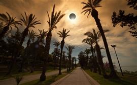 Eclipse, cielo, palmeras, camino, mar.