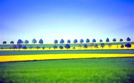 Campos e árvores, amarelo e verde