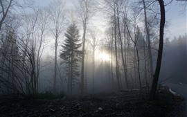 Fog, forest, trees, morning