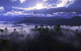 Niebla, árboles, río, nubes, amanecer.