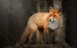 Forest, fox, side view