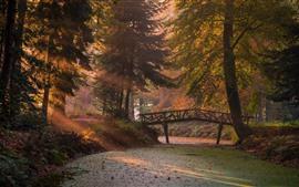 Preview wallpaper Forest, river, bridge, sun rays, fog, morning