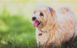 Preview wallpaper Furry puppy, front view, grass