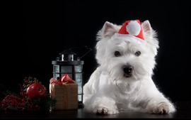 Preview wallpaper Furry white dog, apple, lamp