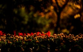 Garden flowers, hazy