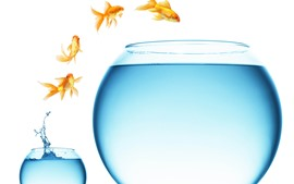 Preview wallpaper Goldfish jumping, big and small glass fish tank, water