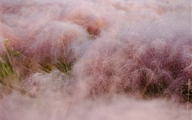 Preview wallpaper Grass, pink, morning, water droplets