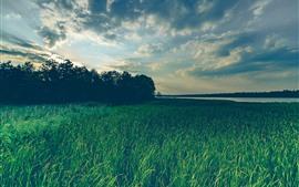 Herbe, arbres, rivière, nuages, paysage naturel