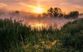 Grass, trees, river, fog, morning, sunrise