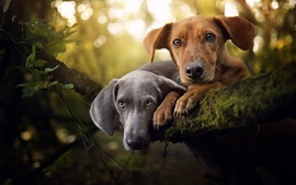 Gray and brown dogs, tree, moss