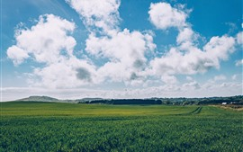 Green fields, blue sky, white clouds, countryside