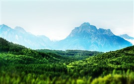 Green forest, mountains, morning