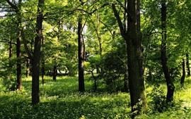 Verde, árvores, grama, flores silvestres, verão