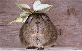 Preview wallpaper Guinea pig, leaves, funny animal