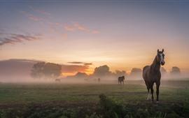 Cavalos, manhã, nevoeiro