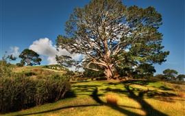 Árbol enorme, hierba, sombra