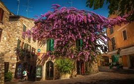 Italia, Lombardía, Sirmione, ciudad, calle, flores de color púrpura