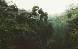 Preview wallpaper Jungle, trees, house