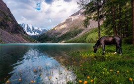 Lake, trees, horse, mountains