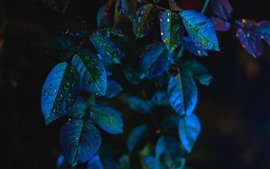 Preview wallpaper Leaves, water droplets, darkness