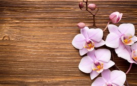 Light pink phalaenopsis, flowers, wood board