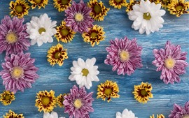 Many flowers, chrysanthemum, pink, white, yellow