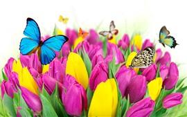 Muitas tulipas, flores cor de rosa e amarelas, borboleta