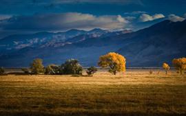 Prado, árvores, montanhas, outono
