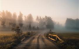 Morning, trees, fields, fog, road