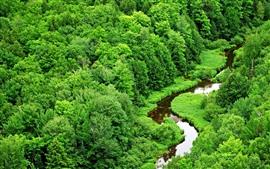 Cenário da natureza, grama, árvores, verde, fluxo