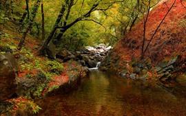 Cenário da natureza, árvores, riacho, pedras, outono