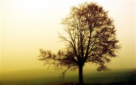 Preview wallpaper One tree, morning, fog