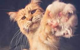 Preview wallpaper Orange cat, paw, furry