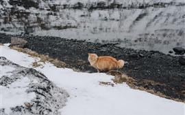 Gato laranja, neve, inverno