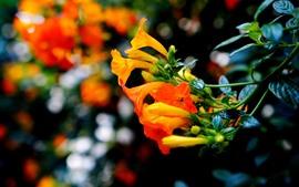 Preview wallpaper Orange flowers, plants
