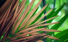 Folhas de palmeira, listras